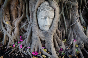 buddha-in-tree-roots-copy